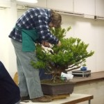 Demo Day 1 - taxus and juniper 017