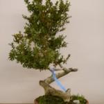 Jan 07 Studio trees 001