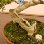 Jan 07 Studio trees 002