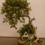 Jan 07 Studio trees 003