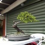 Wed WS NZ 023