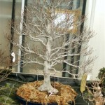 New trees 2005 007