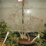 New trees 2005 008